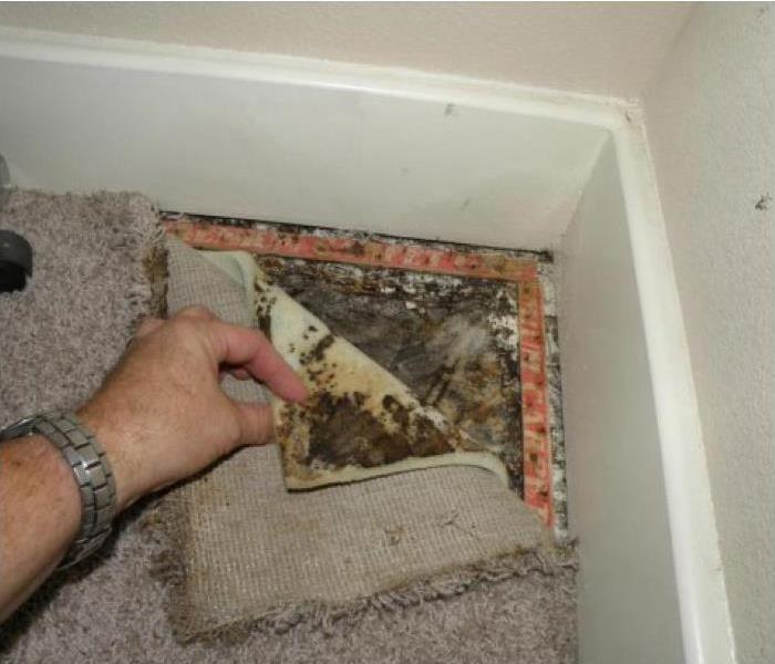 Mold Remediation Spring Mold Can Be Sneaky!