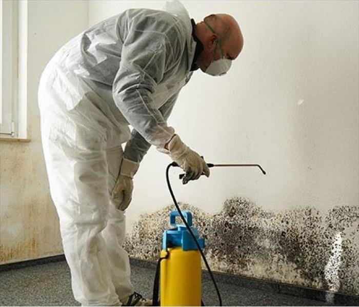 Mold Remediation 3 Ways in Which Mold Grows Quickly Out of Hand!